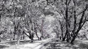 infrarött Arkivbild