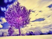 Infrarött foto av ett träd, med obetydlig rörelse på trädkanterna och ett ljust vitt golv av gräs Arkivbild