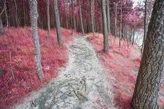 Infrarött skoglandskap Royaltyfria Bilder