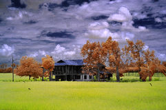 Infrarött traditionellt trähus i mitt av risfältfältet Royaltyfria Bilder