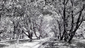 Infrared Fotografia Stock