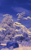 Infrared 5 Royalty Free Stock Photography