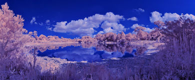 Infrared Of Beautiful Florida Landscape  Stock Photography