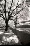 Infrared Black and White Photo. Of Trees in the Park Royalty Free Stock Image