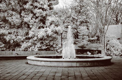 Infrared Botanical Waterfountain. True infrared photo of a botanical water fountain. Modified camera with 720nm cutoff filter. Sepia tone Royalty Free Stock Images