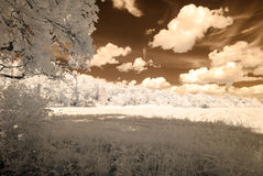 infrared camera image. forest view Stock Photography