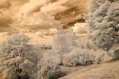 infrared camera image. forest view Stock Photos
