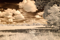 infrared camera image. forest view Royalty Free Stock Photos