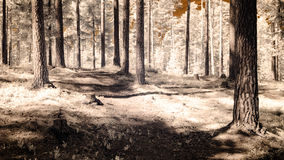 infrared camera image. forest view Stock Photo