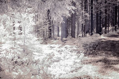 infrared camera image. forest view Stock Images