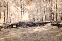 infrared camera image. forest view Royalty Free Stock Images
