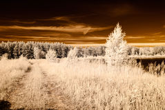 Infrared camera image. open green fields. Infrared camera image. colored. open green fields with flowers in meadows and some trees Stock Photography