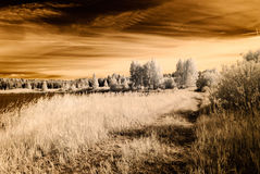 Infrared camera image. open green fields. Infrared camera image. colored. open green fields with flowers in meadows and some trees Royalty Free Stock Photography