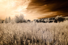 Infrared camera image. open green fields Stock Photo