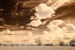 Infrared camera image. open green fields Royalty Free Stock Images