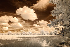 Infrared camera image. open green fields. Infrared camera image. colored. open green fields with flowers in meadows and some trees Stock Photos