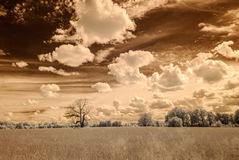 Infrared camera image. open green fields. Infrared camera image. colored. open green fields with flowers in meadows and some trees Royalty Free Stock Photo