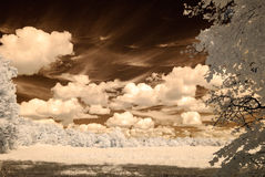 Infrared camera image. open green fields. Infrared camera image. colored. open green fields with flowers in meadows and some trees Royalty Free Stock Image