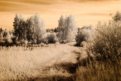 Infrared camera image. open green fields Stock Image