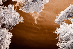 Infrared camera image. skyscape through trees and leaves Stock Photos