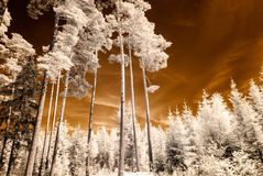Infrared camera image. skyscape through trees and leaves Royalty Free Stock Image