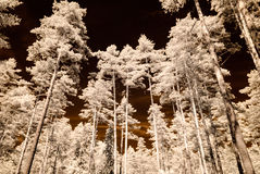 Infrared camera image. skyscape through trees and leaves Royalty Free Stock Photography
