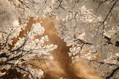 Infrared camera image. skyscape through trees and leaves Royalty Free Stock Images
