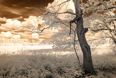 Infrared camera image. skyscape through trees and leaves Stock Photo