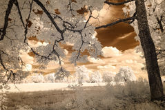 Infrared camera image. skyscape through trees and leaves Stock Images