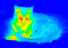 Infrared cat portrait. Infrared portrait of sleeping cat Stock Photography