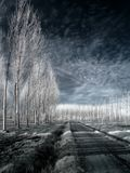 Infrared country road Royalty Free Stock Images