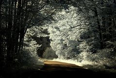 Infrared country road crossing forest. Road crossing forest. Shot with infrared filter Royalty Free Stock Photo