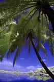 Infrared Cyberjaya Lakeside Selangor Malaysia Royalty Free Stock Photography