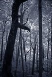 Infrared deep forest trees Stock Photos