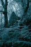 Infrared dense forest. Deep in the Peneda Geres Portuguese National Park dense forest. Used infrared filter stock images