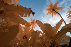Infrared in false colors of foliage Stock Image