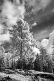 Infrared forest landscape Stock Photos