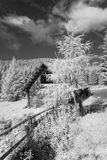 Infrared forest landscape with wooden fence and hut Stock Photo