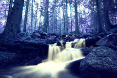 Infrared forest Royalty Free Stock Image