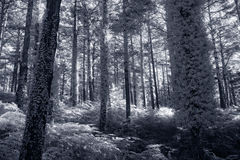 Infrared forest Stock Images