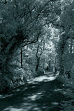 Infrared forest road Stock Photography