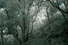 Infrared forest road Royalty Free Stock Images