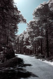 Infrared forest road Stock Image