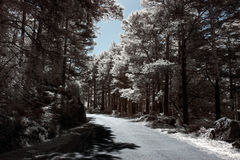 Infrared forest road Stock Photo