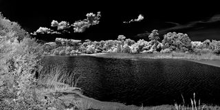 Infrared image in park in Florida Stock Photo