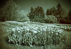 Infrared (IR) landscape with tulips Stock Photo