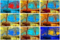 Infrared kolekcja drzewa Obrazy Royalty Free