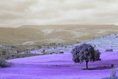 Infrared krajobraz Zdjęcia Stock