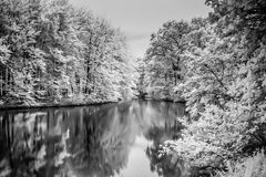 Infrared Lake and Trees in The Hague Woods Stock Photo