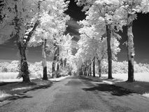 Infrared landscape. Photo was made with an infrared filter Stock Images